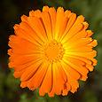 Orange_copy_2