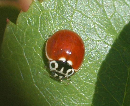 Bugbigweb0407